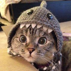 Attack Monday like a Shark!