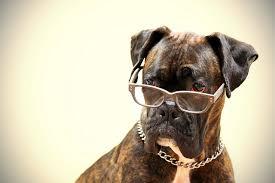 dog serious